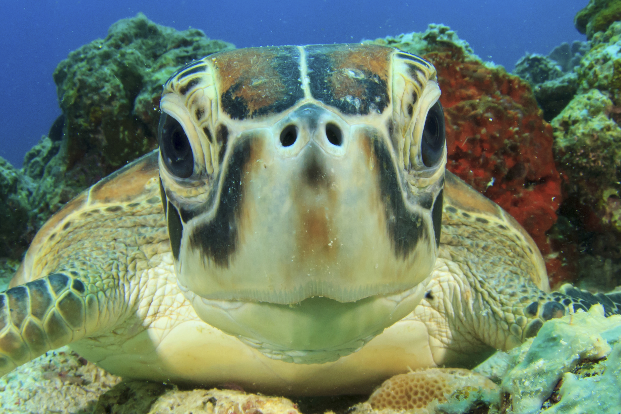 Gili Islands Where To See Turtles Map